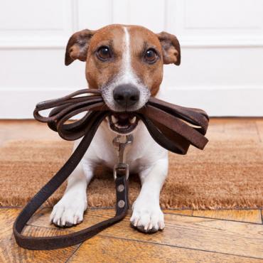 Home Pet Care – White Plains NY