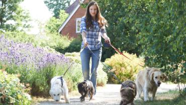 home pet care services