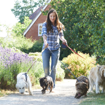 Home Pet Care Services – Rye NY